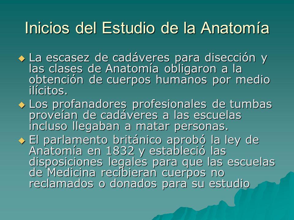 Inicios del Estudio de la Anatomía La escasez de cadáveres para disección y las clases de Anatomía obligaron a la obtención de cuerpos humanos por med