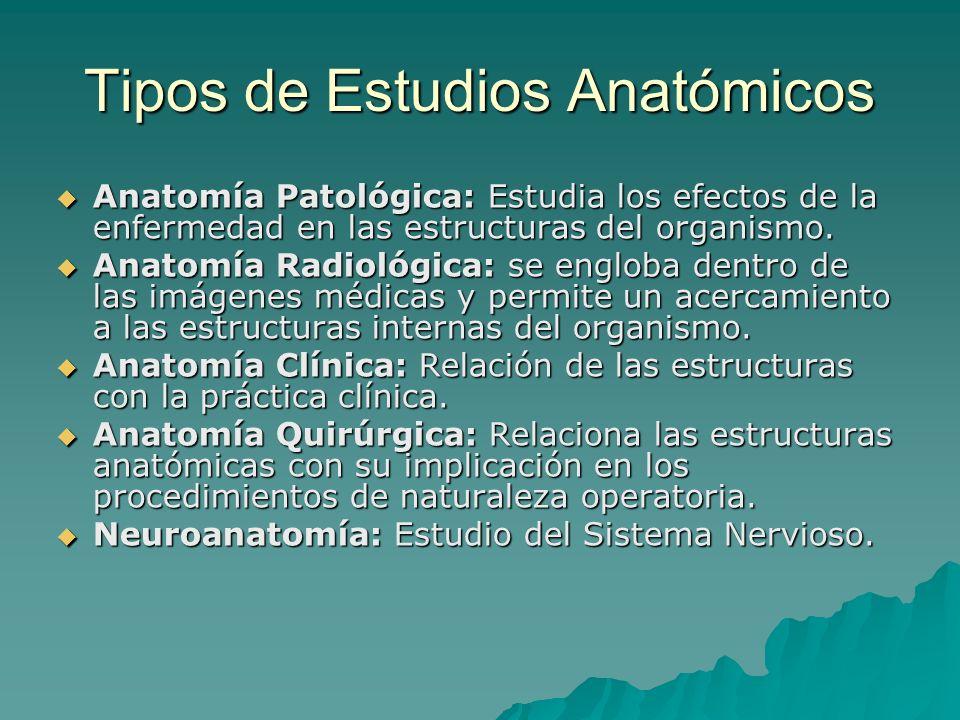 Tipos de Estudios Anatómicos Anatomía Patológica: Estudia los efectos de la enfermedad en las estructuras del organismo. Anatomía Patológica: Estudia