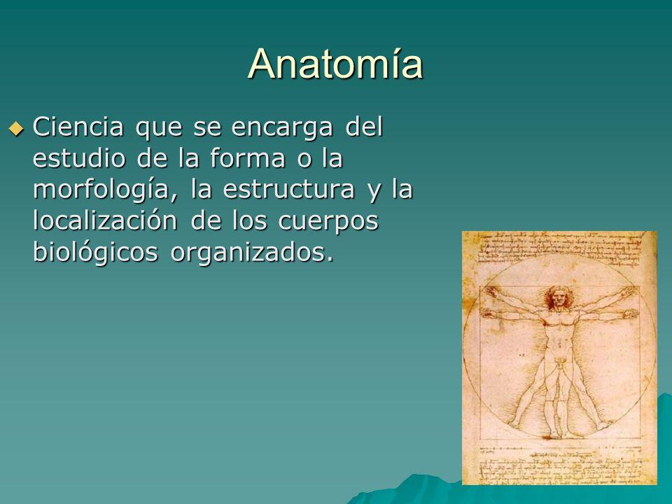 Anatomía Ciencia que se encarga del estudio de la forma o la morfología, la estructura y la localización de los cuerpos biológicos organizados. Cienci