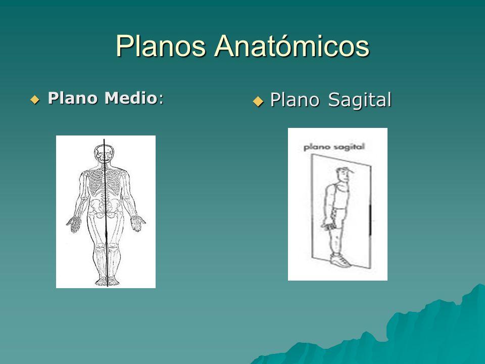 Planos Anatómicos Plano Medio: Plano Medio: Plano Sagital Plano Sagital