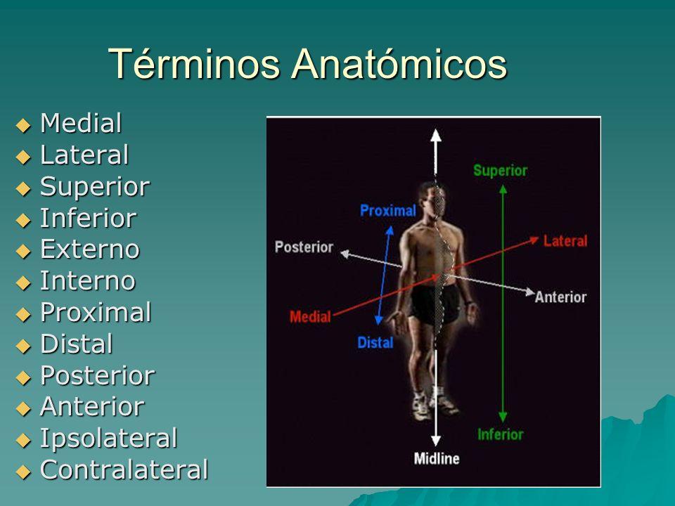 Términos Anatómicos Medial Medial Lateral Lateral Superior Superior Inferior Inferior Externo Externo Interno Interno Proximal Proximal Distal Distal