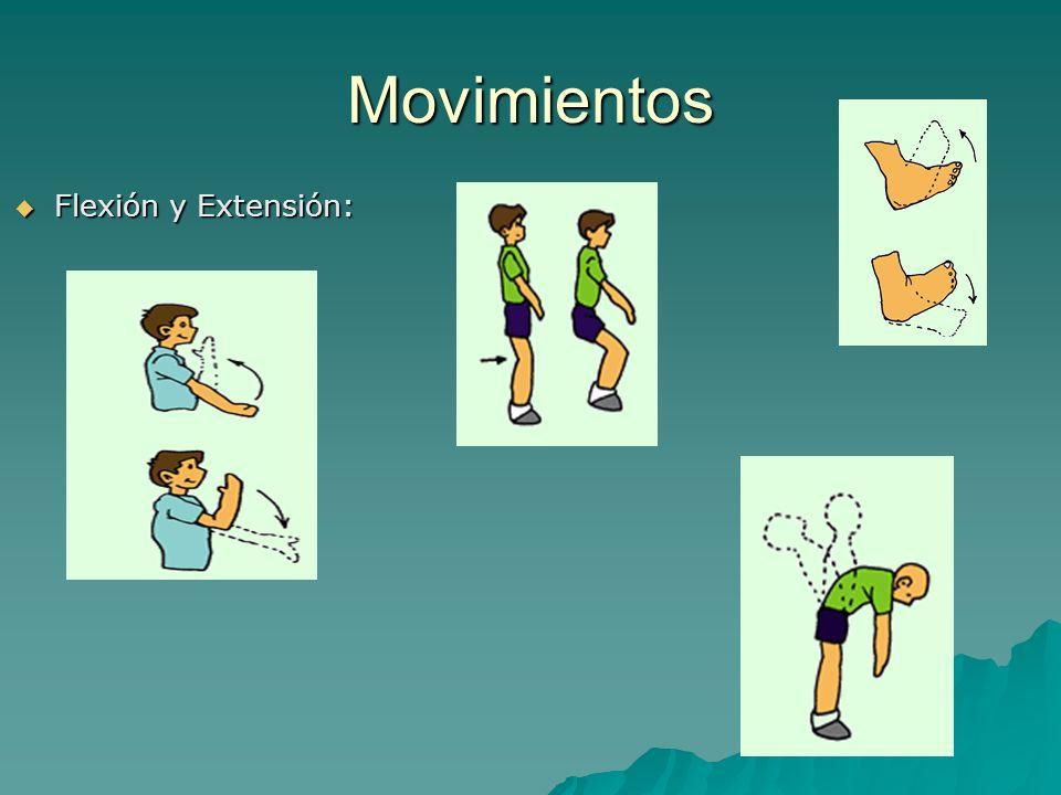 Movimientos Flexión y Extensión: Flexión y Extensión: