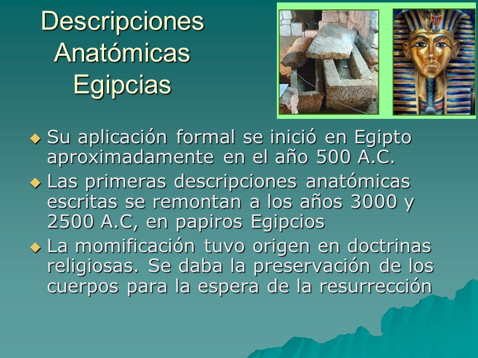 Descripciones Anatómicas Egipcias Su aplicación formal se inició en Egipto aproximadamente en el año 500 A.C. Su aplicación formal se inició en Egipto