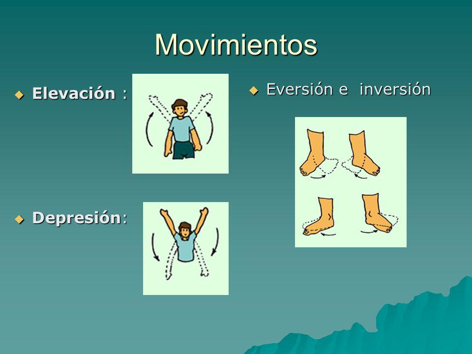Movimientos Elevación : Elevación : Depresión: Depresión: Eversión e inversión Eversión e inversión