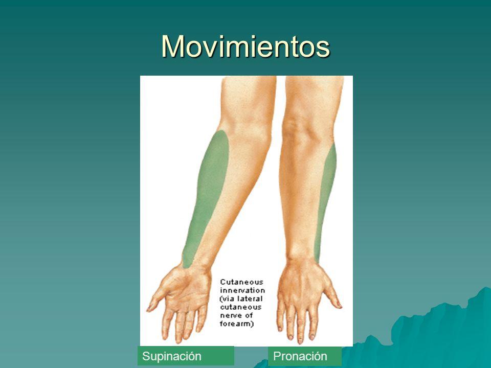 Movimientos Supinación Pronación