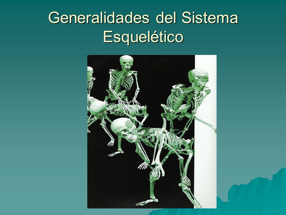 Generalidades del Sistema Esquelético