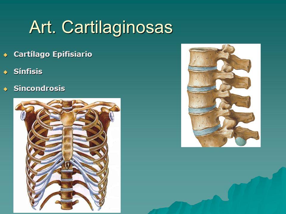 Art. Cartilaginosas Cartílago Epifisiario Cartílago Epifisiario Sínfisis Sínfisis Sincondrosis Sincondrosis