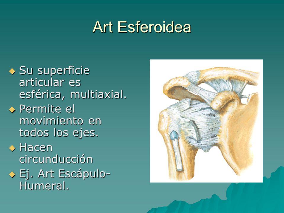 Art Esferoidea Su superficie articular es esférica, multiaxial. Su superficie articular es esférica, multiaxial. Permite el movimiento en todos los ej