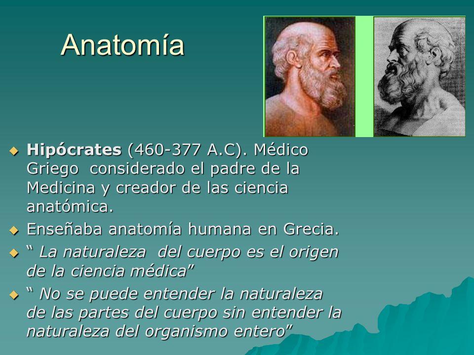 Anatomía Hipócrates (460-377 A.C). Médico Griego considerado el padre de la Medicina y creador de las ciencia anatómica. Hipócrates (460-377 A.C). Méd