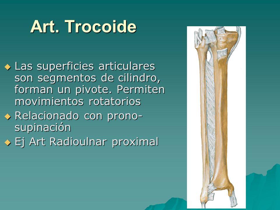 Art. Trocoide Las superficies articulares son segmentos de cilindro, forman un pivote. Permiten movimientos rotatorios Las superficies articulares son