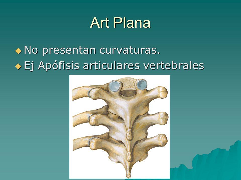 Art Plana No presentan curvaturas. No presentan curvaturas. Ej Apófisis articulares vertebrales Ej Apófisis articulares vertebrales