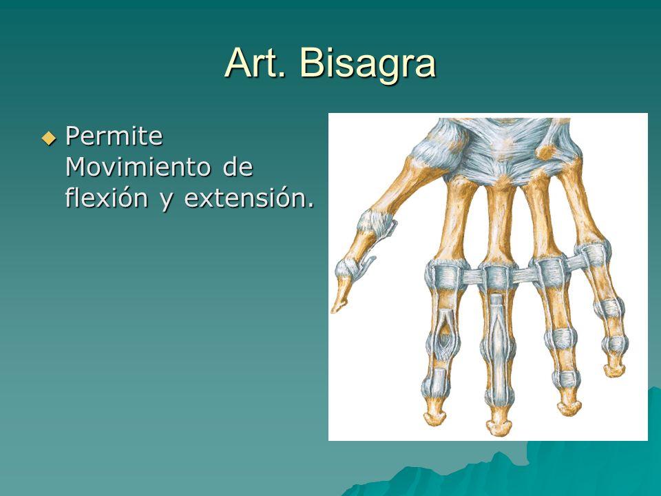 Art. Bisagra Permite Movimiento de flexión y extensión. Permite Movimiento de flexión y extensión.
