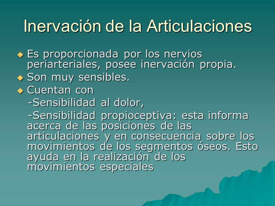 Inervación de la Articulaciones Es proporcionada por los nervios periarteriales, posee inervación propia. Es proporcionada por los nervios periarteria