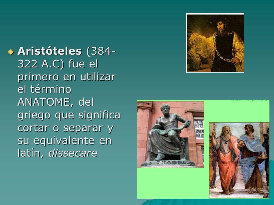 Aristóteles (384- 322 A.C) fue el primero en utilizar el término ANATOME, del griego que significa cortar o separar y su equivalente en latín, disseca