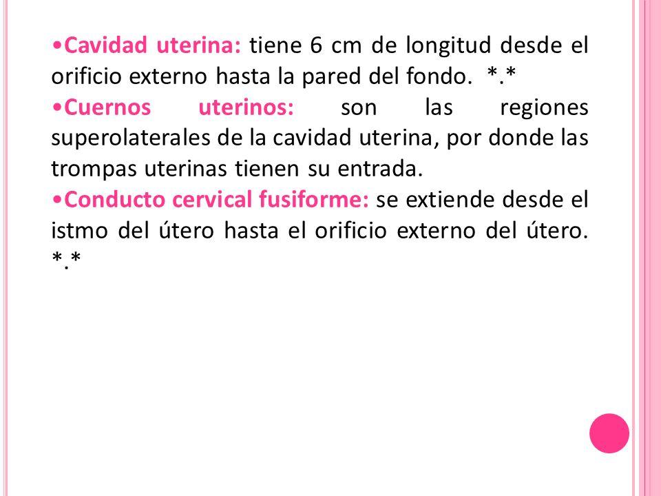 Cavidad uterina: tiene 6 cm de longitud desde el orificio externo hasta la pared del fondo. *.* Cuernos uterinos: son las regiones superolaterales de