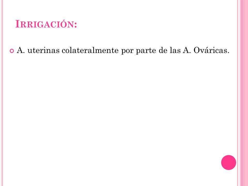 I RRIGACIÓN : A. uterinas colateralmente por parte de las A. Ováricas.