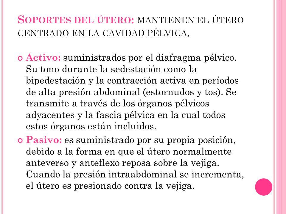 S OPORTES DEL ÚTERO : MANTIENEN EL ÚTERO CENTRADO EN LA CAVIDAD PÉLVICA. Activo: suministrados por el diafragma pélvico. Su tono durante la sedestació