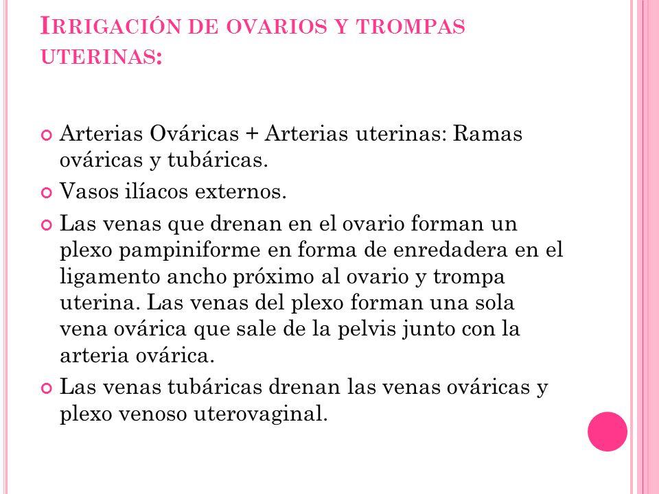 I RRIGACIÓN DE OVARIOS Y TROMPAS UTERINAS : Arterias Ováricas + Arterias uterinas: Ramas ováricas y tubáricas. Vasos ilíacos externos. Las venas que d