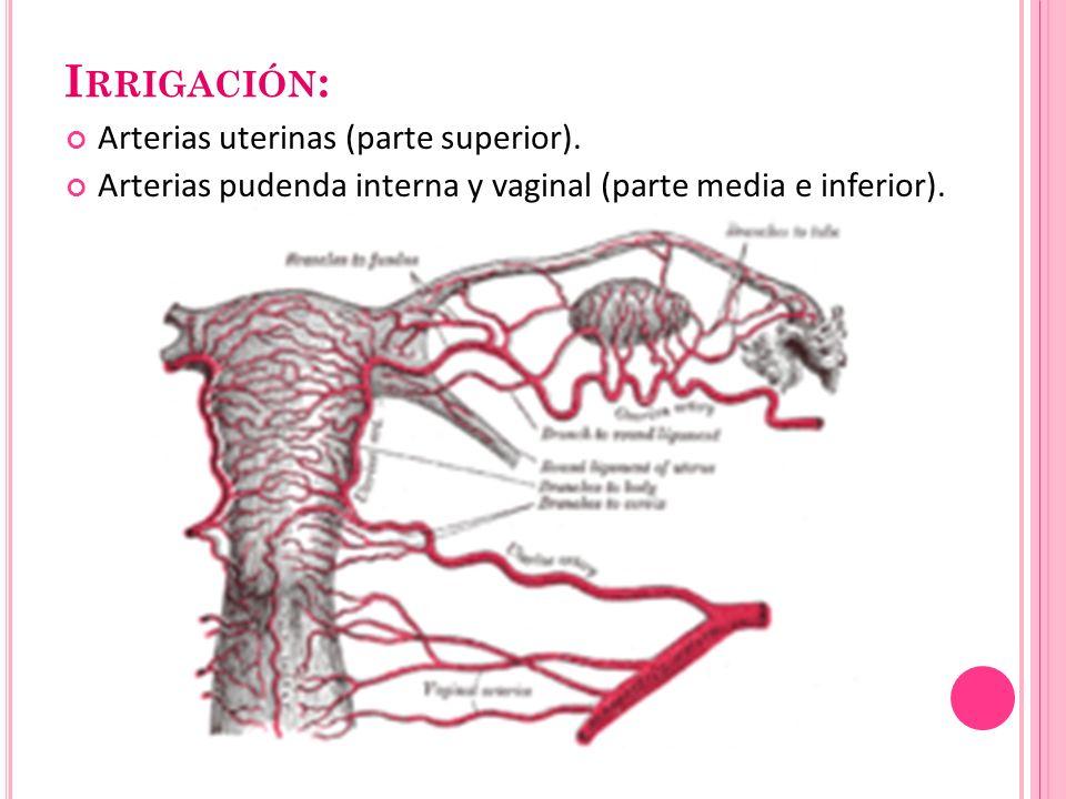 I RRIGACIÓN : Arterias uterinas (parte superior). Arterias pudenda interna y vaginal (parte media e inferior).