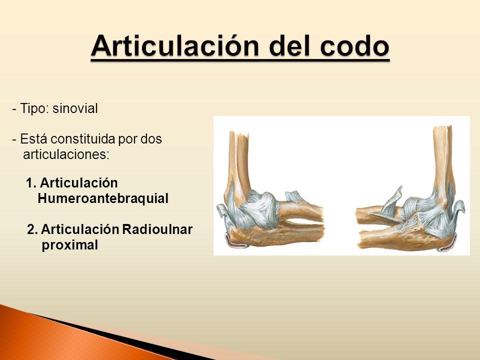 - Tipo: sinovial - Está constituida por dos articulaciones: 1. Articulación Humeroantebraquial 2. Articulación Radioulnar proximal