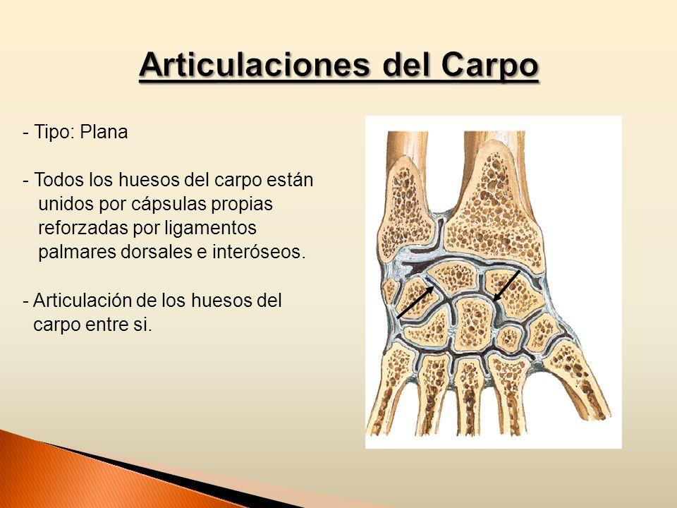 - Tipo: Plana - Todos los huesos del carpo están unidos por cápsulas propias reforzadas por ligamentos palmares dorsales e interóseos. - Articulación