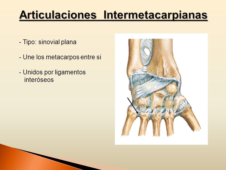 - Tipo: sinovial plana - Une los metacarpos entre si - Unidos por ligamentos interóseos