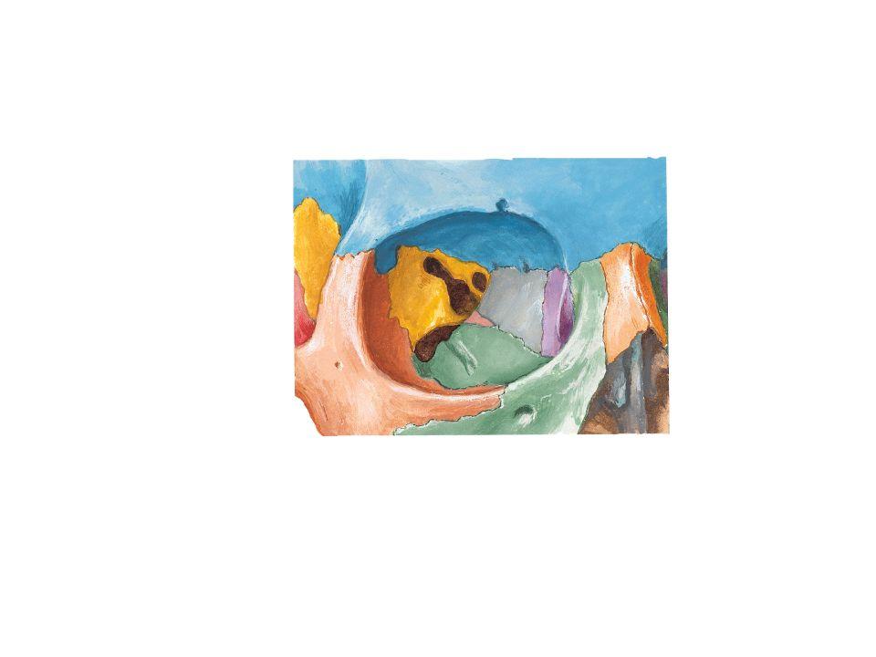 Rampas Rampa Timpánica: comunica la ventana redonda y a través de ella con la caja timpánica del oído medio.