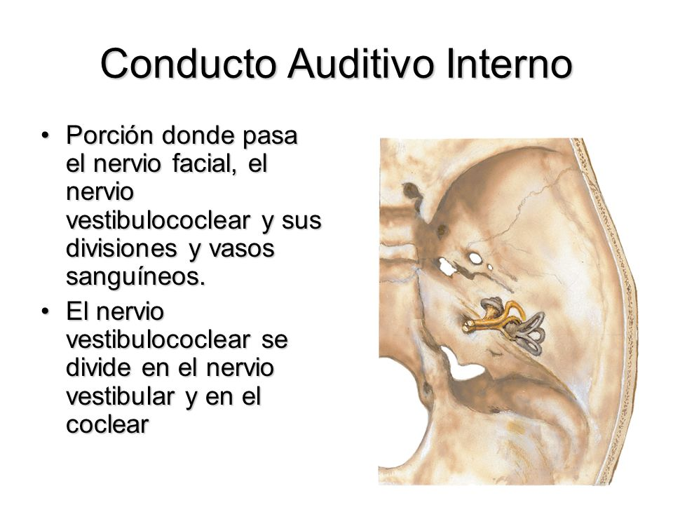 Conducto Auditivo Interno Porción donde pasa el nervio facial, el nervio vestibulococlear y sus divisiones y vasos sanguíneos.Porción donde pasa el ne