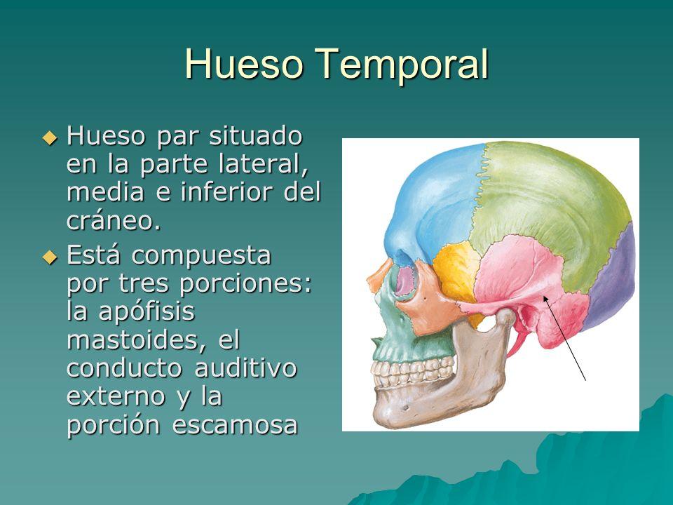 Hueso Temporal Hueso par situado en la parte lateral, media e inferior del cráneo. Hueso par situado en la parte lateral, media e inferior del cráneo.