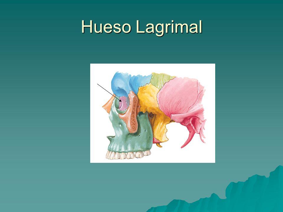 Hueso Lagrimal