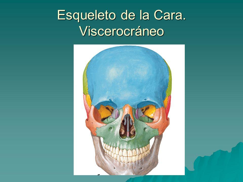 Esqueleto de la Cara. Viscerocráneo
