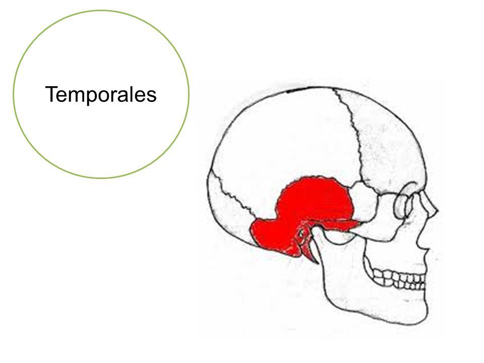 Temporales