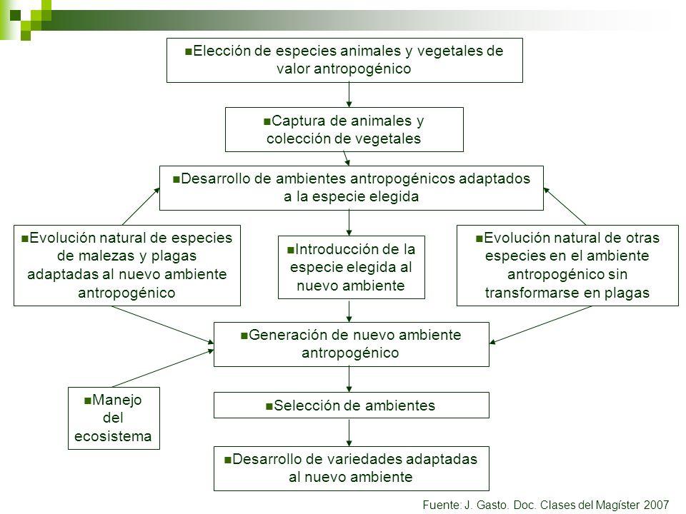 Elección de especies animales y vegetales de valor antropogénico Captura de animales y colección de vegetales Desarrollo de ambientes antropogénicos a