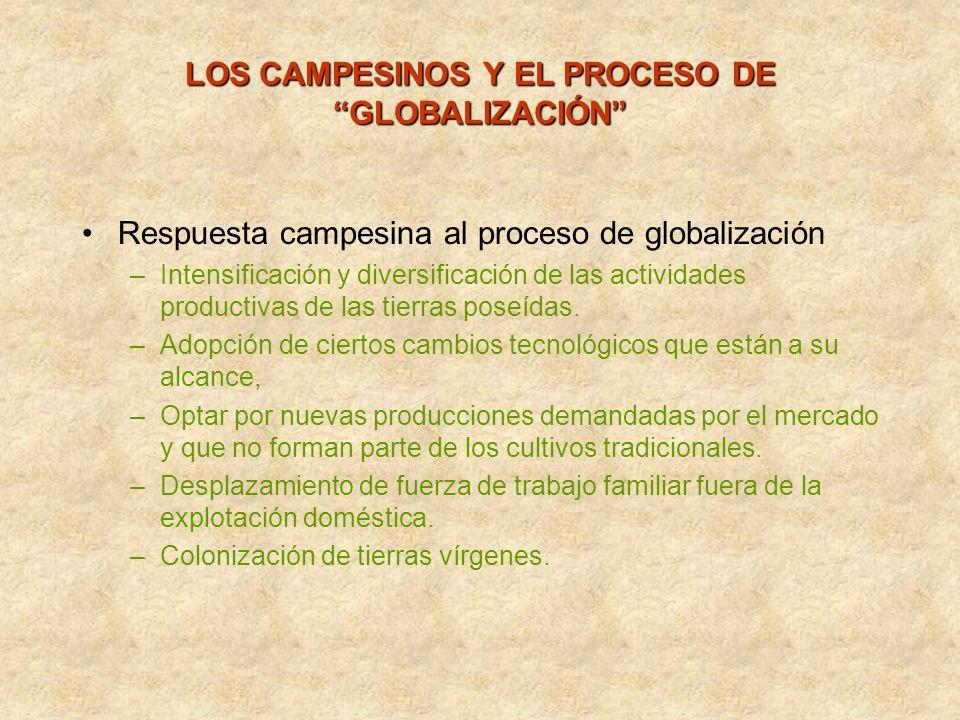 Respuesta campesina al proceso de globalización –Intensificación y diversificación de las actividades productivas de las tierras poseídas. –Adopción d