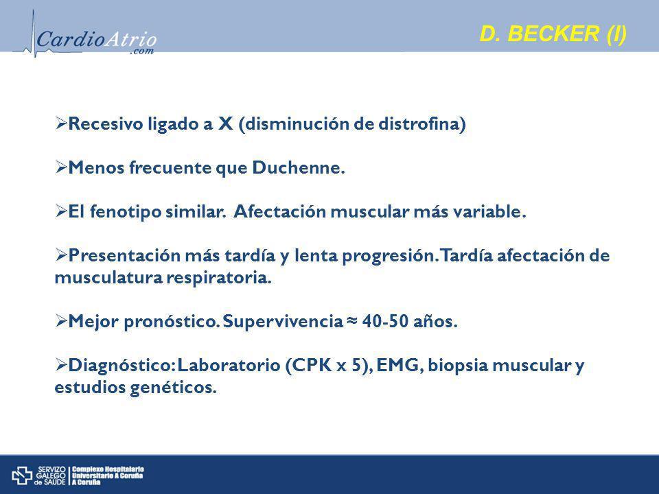 D.BECKER (I) Recesivo ligado a X (disminución de distrofina) Menos frecuente que Duchenne.