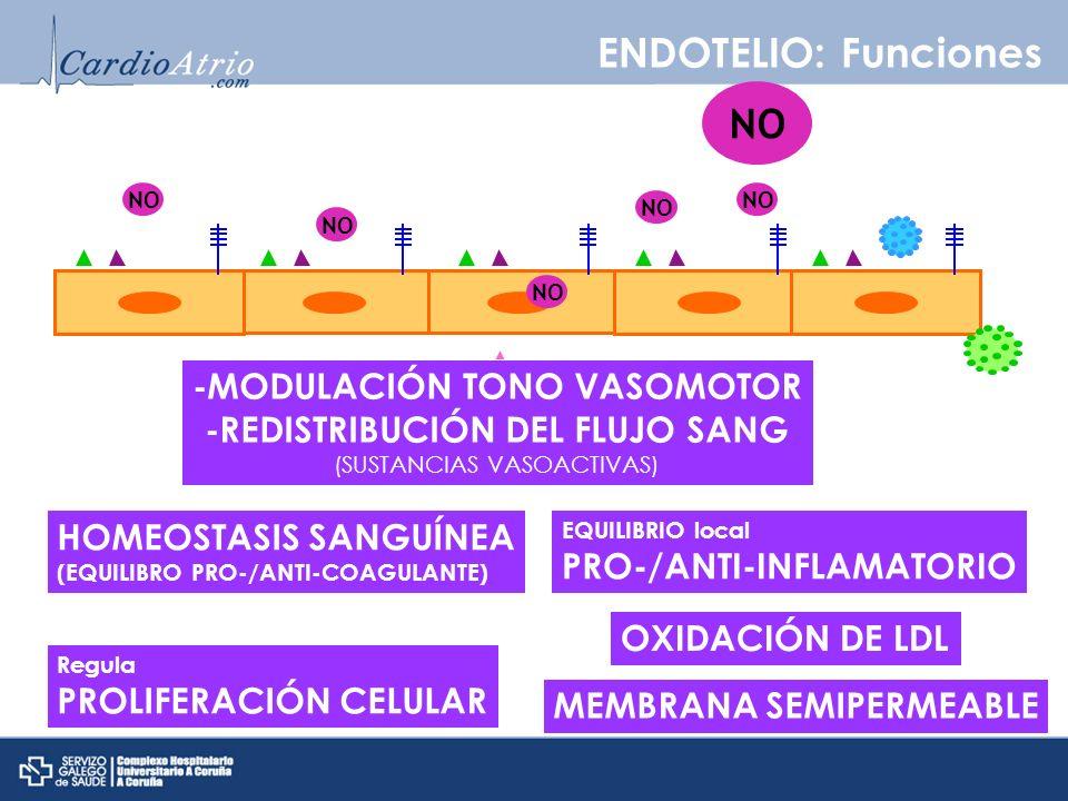 ENDOTELIO: Funciones HOMEOSTASIS SANGUÍNEA (EQUILIBRO PRO-/ANTI-COAGULANTE) -MODULACIÓN TONO VASOMOTOR -REDISTRIBUCIÓN DEL FLUJO SANG (SUSTANCIAS VASO