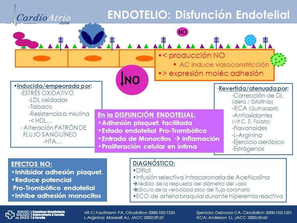 Inducida/empeorada por: -ESTRÉS OXIDATIVO -LDL oxidadas -Tabaco -Resistencia a Insulina -< HDL… - Alteración PATRÓN DE FLUJO SANGUÍNEO -HTA… < producc