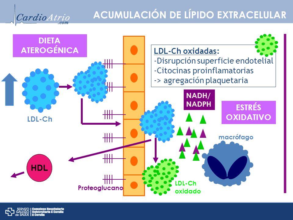 ESTRÉS OXIDATIVO NADH/ NADPH LDL-Ch oxidado macrófago Proteoglucano LDL-Ch oxidadas: -Disrupción superficie endotelial -Citocinas proinflamatorias ->