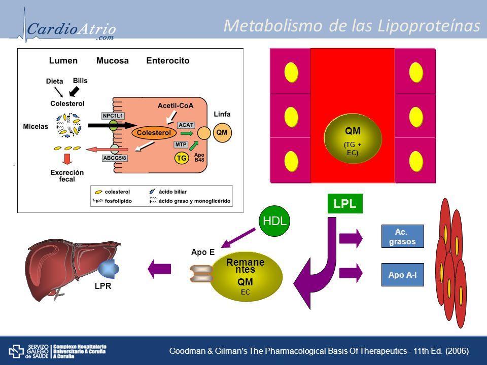 Metabolismo de las Lipoproteínas Colesterol y ac. grasos QM (TG + EC) LPL Remane ntes QM EC Ac. grasos Apo A-I Apo E LPR Goodman & Gilman's The Pharma