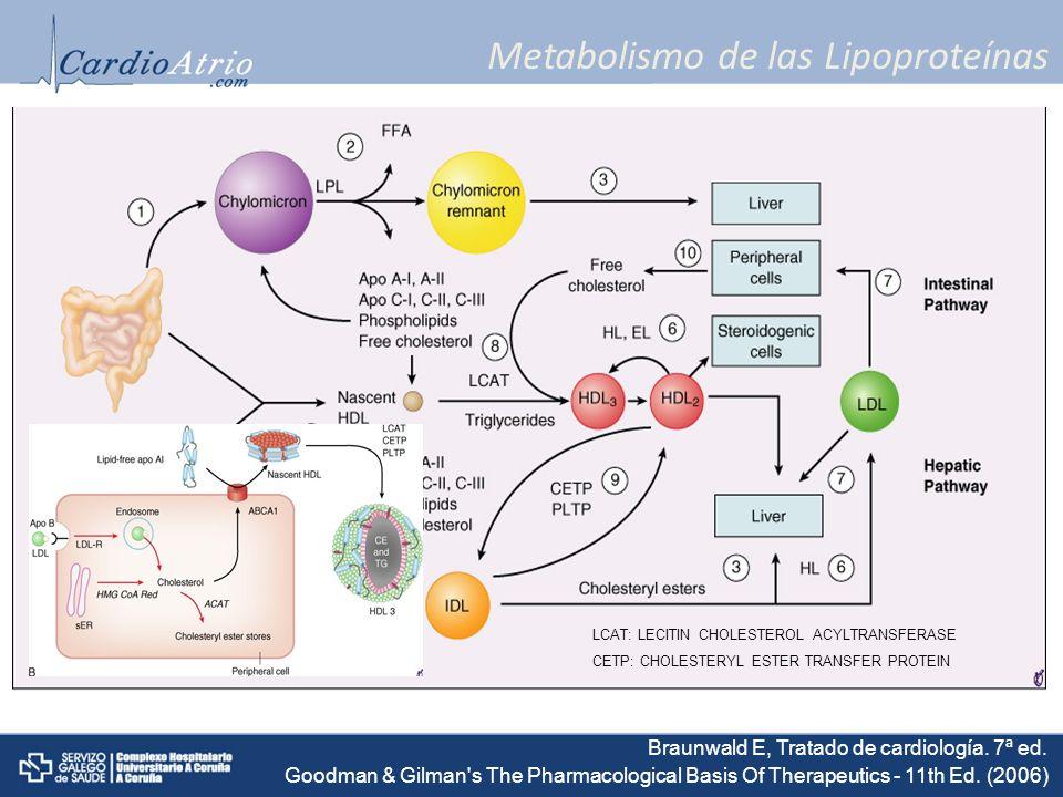 Metabolismo de las Lipoproteínas LCAT: LECITIN CHOLESTEROL ACYLTRANSFERASE CETP: CHOLESTERYL ESTER TRANSFER PROTEIN Braunwald E, Tratado de cardiologí