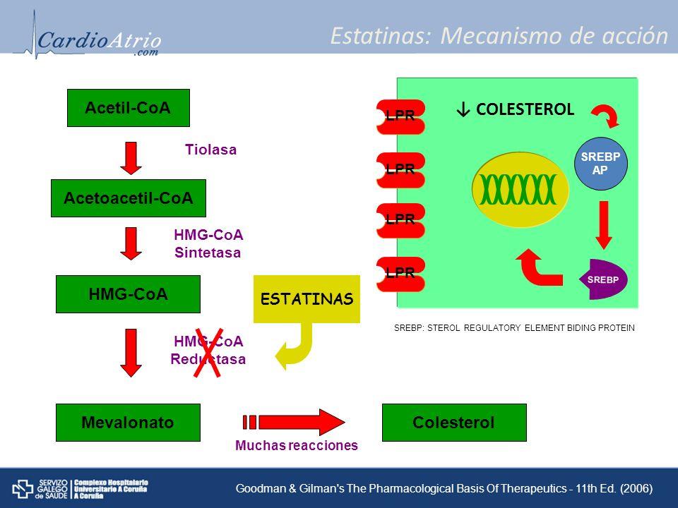 Estatinas: Mecanismo de acción Acetil-CoA Acetoacetil-CoA HMG-CoA Mevalonato Tiolasa HMG-CoA Sintetasa HMG-CoA Reductasa Muchas reacciones Colesterol