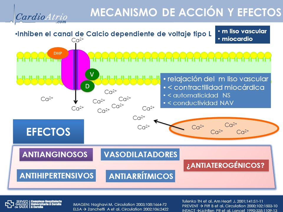 MECANISMO DE ACCIÓN Y EFECTOS Inhiben el canal de Calcio dependiente de voltaje tipo L Ca 2+ D D V V DHP Ca 2+ relajación del m liso vascular < contra
