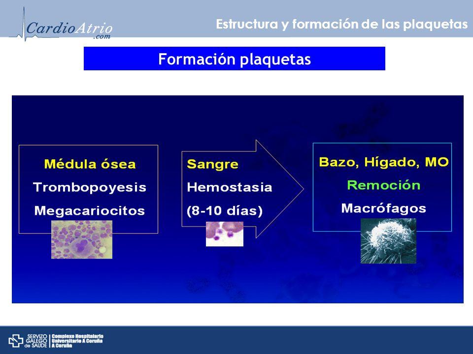 Estructura y formación de las plaquetas ESTRUCTURA PLAQUETAS N Engl J Med 2008;359:938-49.