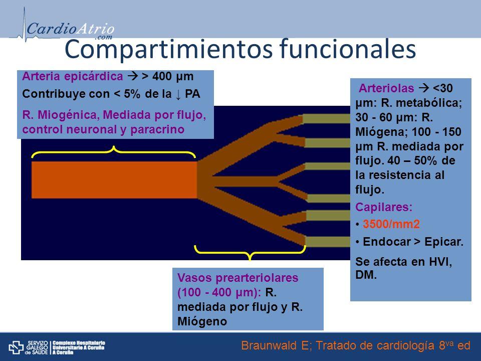 Compartimientos funcionales Arteria epicárdica > 400 μm Contribuye con < 5% de la PA R.