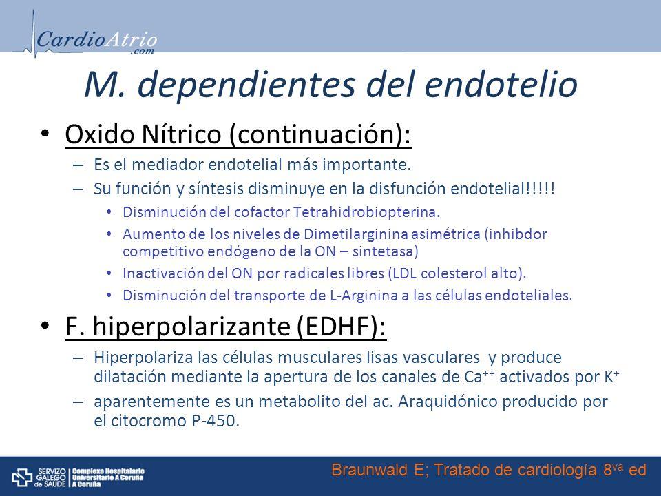 M. dependientes del endotelio Oxido Nítrico (continuación): – Es el mediador endotelial más importante. – Su función y síntesis disminuye en la disfun