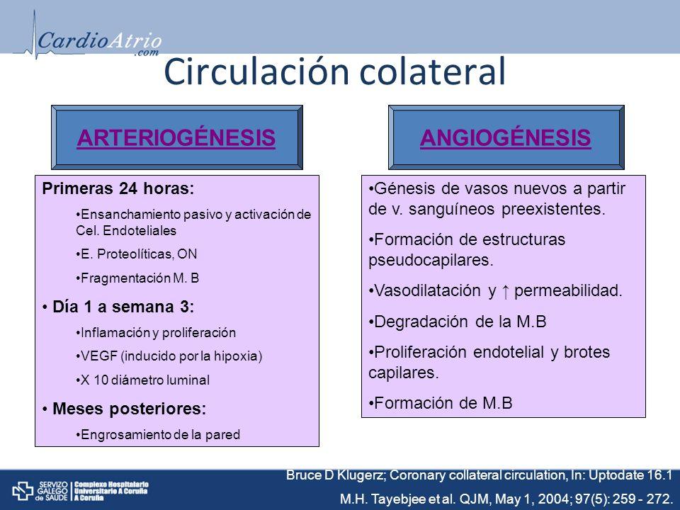 Circulación colateral ARTERIOGÉNESISANGIOGÉNESIS Primeras 24 horas: Ensanchamiento pasivo y activación de Cel.