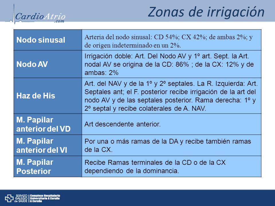 Zonas de irrigación Nodo sinusal Arteria del nodo sinusal: CD 54%; CX 42%; de ambas 2%; y de origen indeterminado en un 2%.