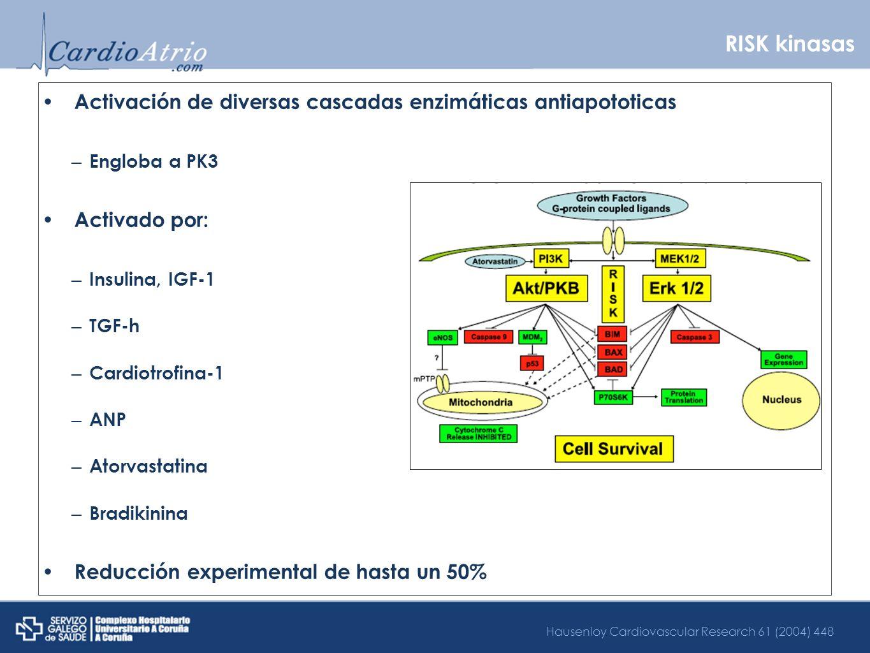 RISK kinasas Activación de diversas cascadas enzimáticas antiapototicas – Engloba a PK3 Activado por: – Insulina, IGF-1 – TGF-h – Cardiotrofina-1 – AN