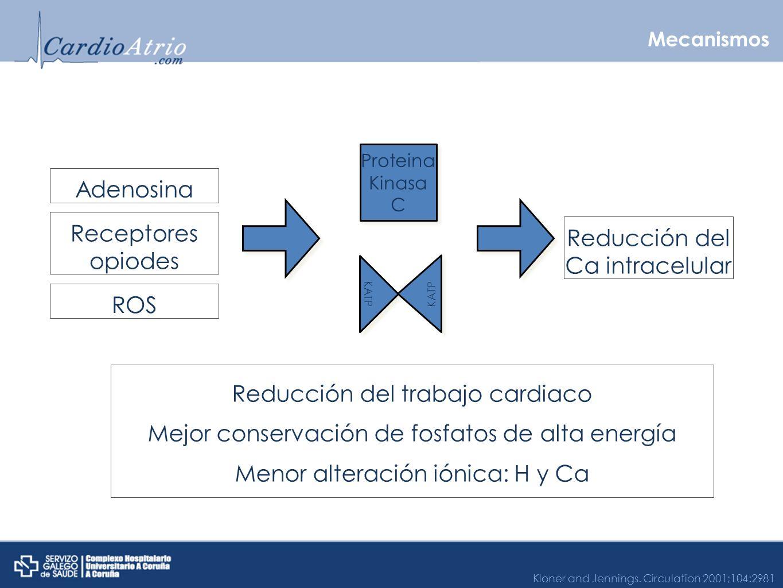 Mecanismos Proteina Kinasa C KATP Adenosina Receptores opiodes ROS Reducción del Ca intracelular Reducción del trabajo cardiaco Mejor conservación de