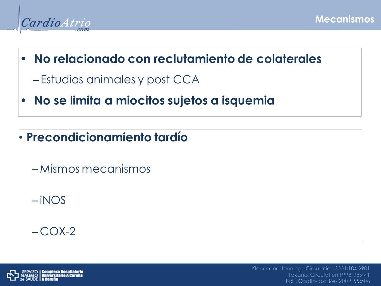Mecanismos No relacionado con reclutamiento de colaterales – Estudios animales y post CCA No se limita a miocitos sujetos a isquemia Kloner and Jennin